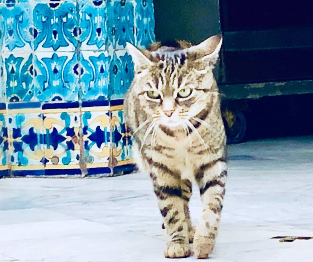 Cat at the Hammam Paris